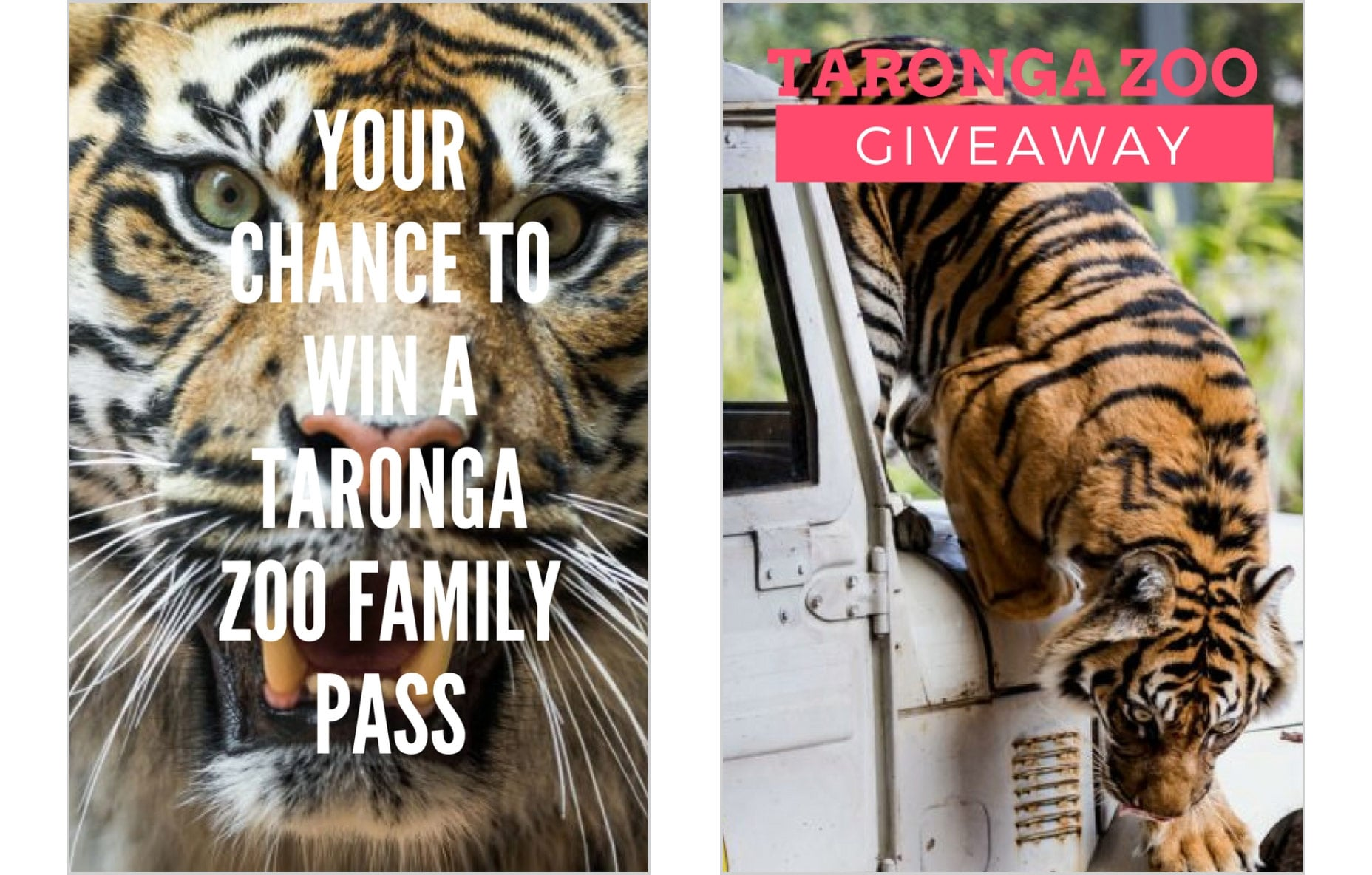 zoo-family-pass-prize